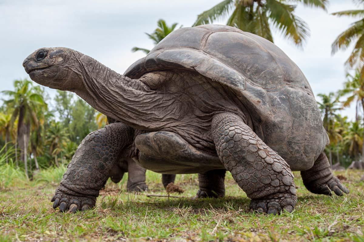 Image result for Giant tortoise: