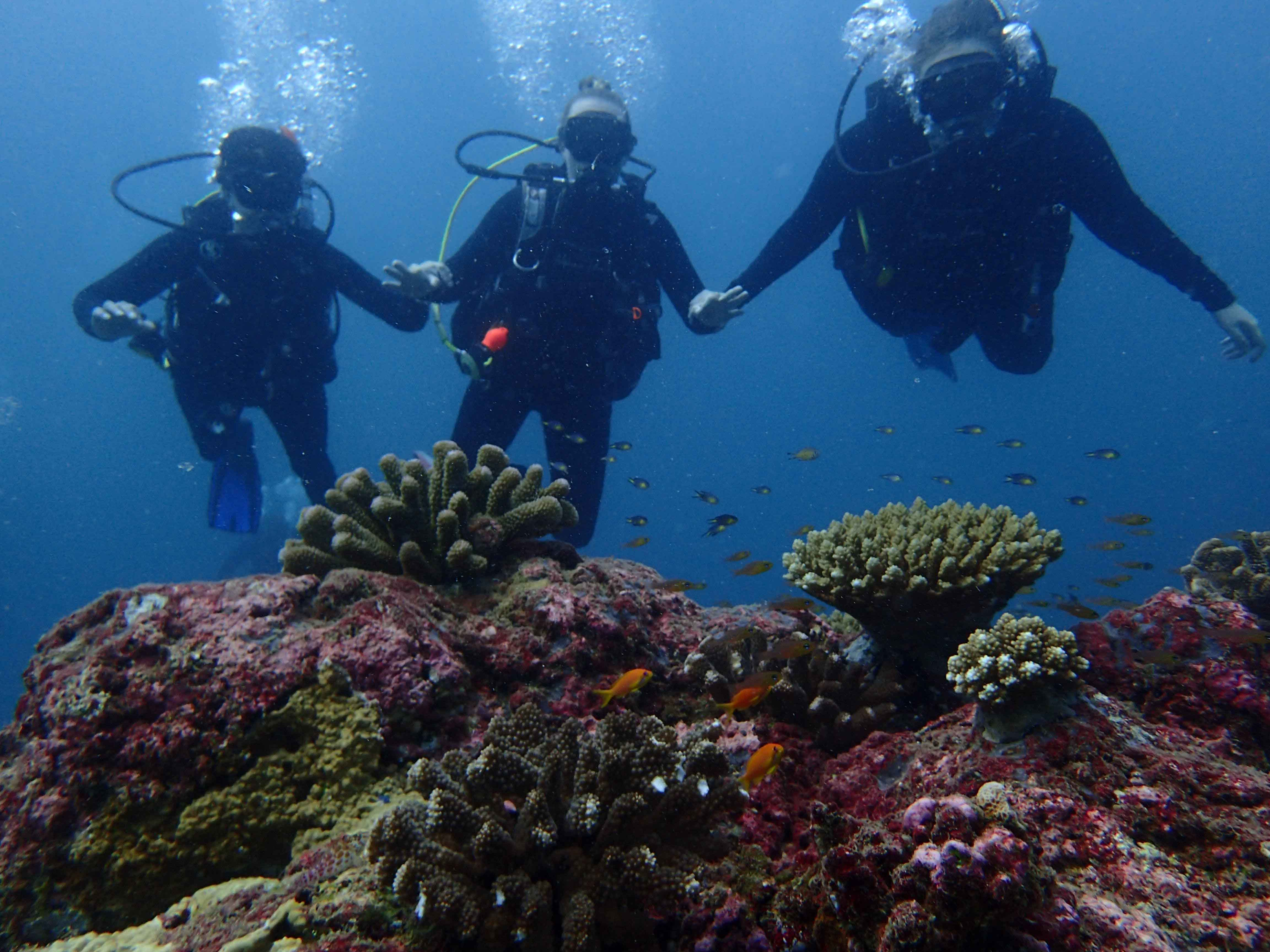 Seychelles_Scuba_Diving_Coral_reef