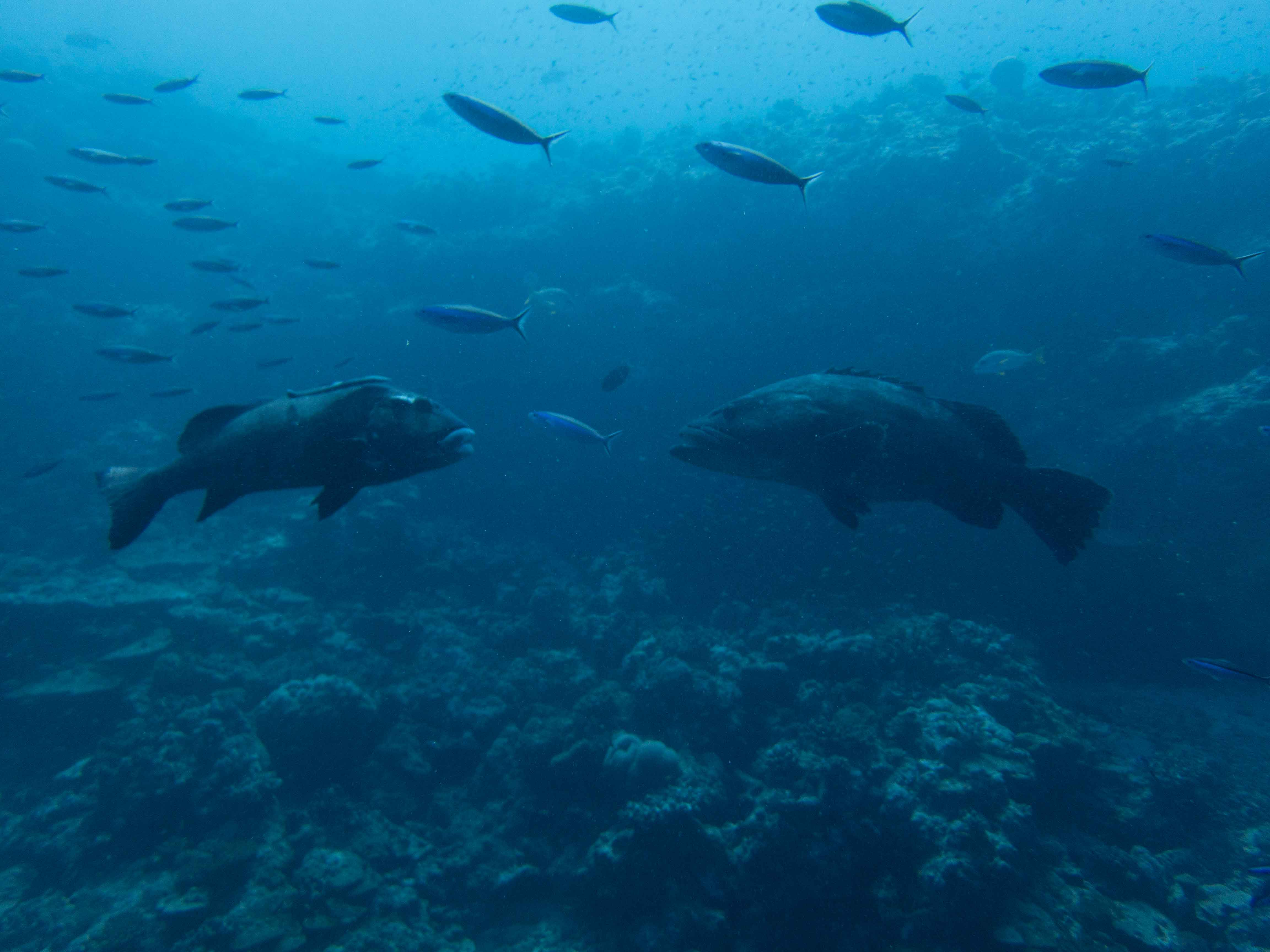 Scuba_Diving_Grouper_Seychelles_6