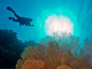 Alphonse Island Dive Centre is a registered PADI Dive Resort and offers a variety of courses.