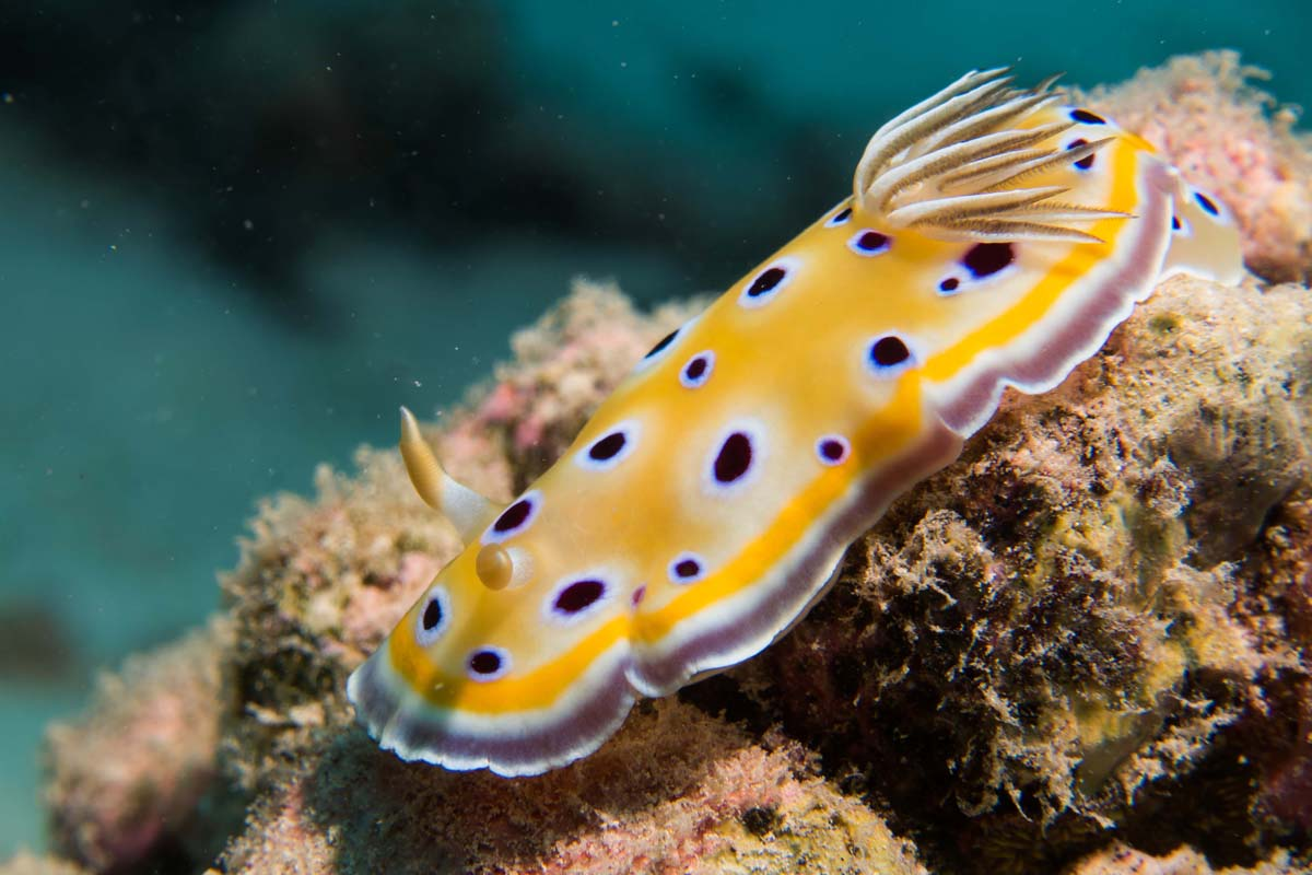 Nudibranch_3